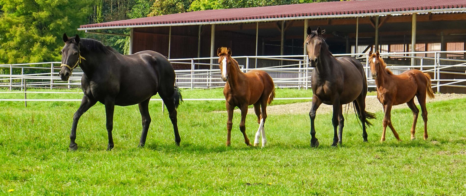 chevaux dans un centre IA